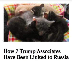 block trump with kittens